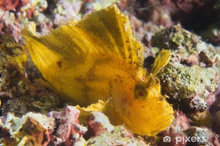 Nálepka Pixerstick Žlutá Leaf ryby v Cebu, Filipíny - Ostatní Ostatní