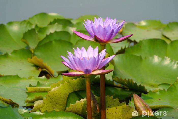 Naklejka Pixerstick Pink lotus kwiaty - Kwiaty