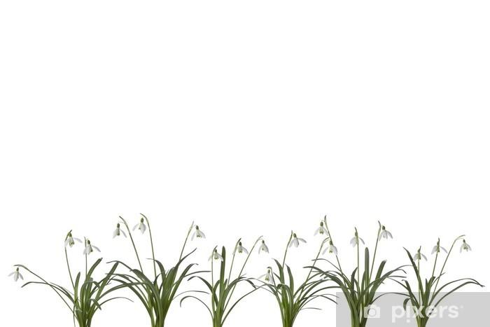 Fototapeta Winylowa Wiersz Przebiśnieg Kwiaty