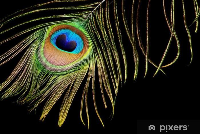 Vinylová fototapeta Peacock peří izolovaných na černém pozadí - Vinylová fototapeta
