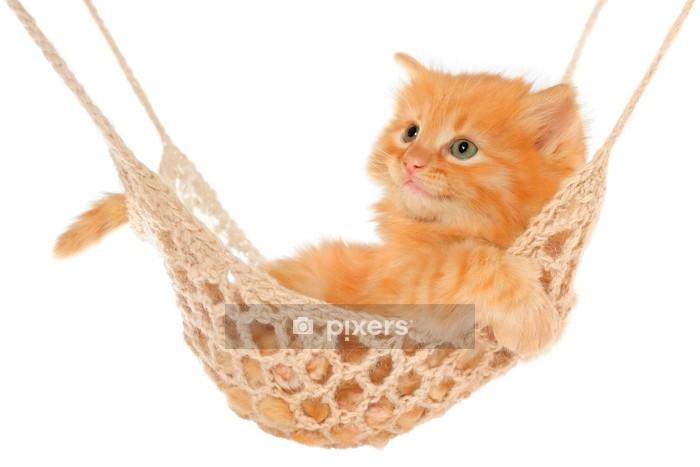 Muursticker Leuke roodharige kitten liggen in de hangmat. - Zoogdieren