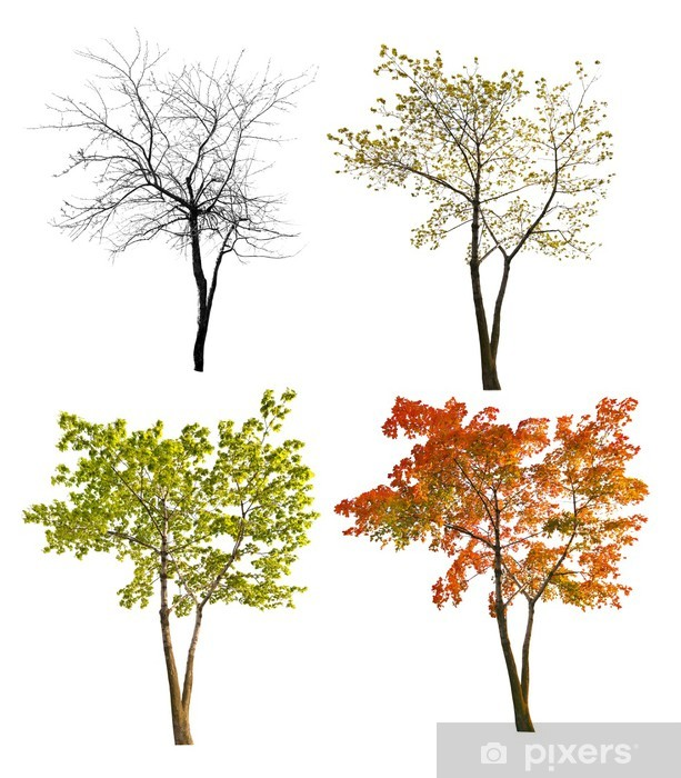 Sticker Pixerstick Quatre saisons érable isoalted sur blanc - Arbres