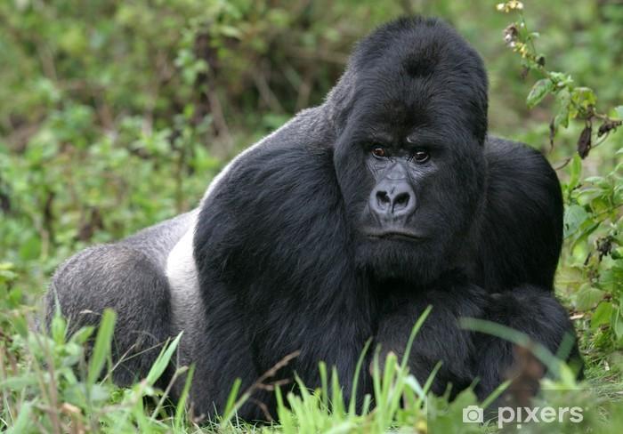 1d33ed96c0bc0 Fototapete Berggorilla Virunga aus den Bergen