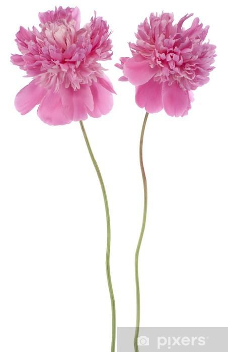 Sticker Pixerstick Pivoine - Fleurs