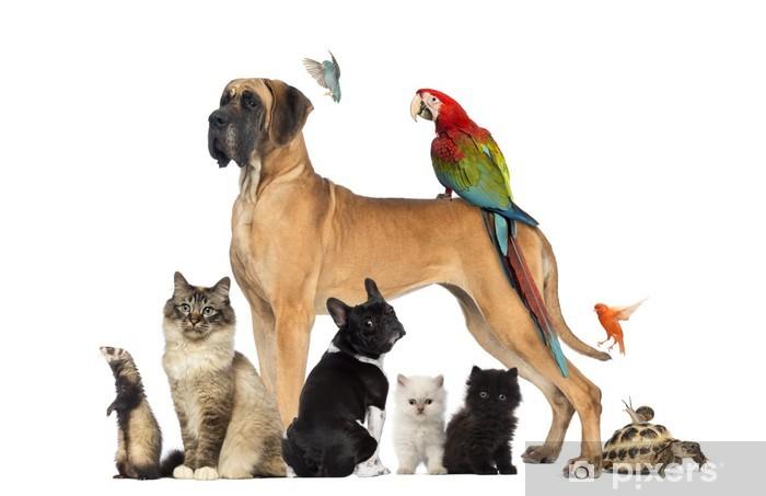 Naklejka Pixerstick Grupa zwierząt - psów, kotów, ptaków, gadów, królik, ... - Ssaki