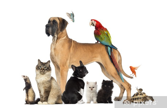Group of pets - Dog, cat, bird, reptile, rabbit,... Pixerstick Sticker - Mammals