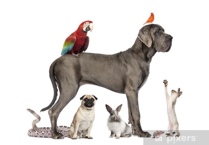 Carta Da Parati Gruppo Di Animali Gruppo Di Animali Domestici