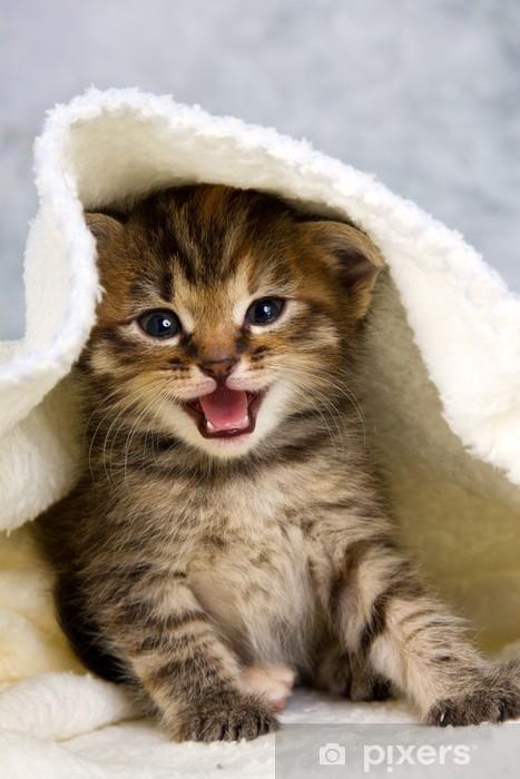 Fototapeta winylowa Kitten zamknięte w ręcznik - Tematy