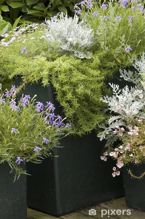 Fototapeta winylowa Doniczki z kwiatami - Kwiaty