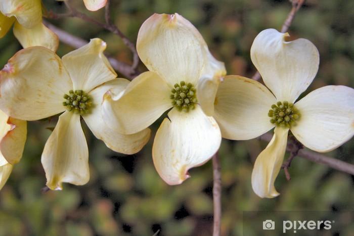 Nálepka Pixerstick Jarních květin v New Yorku - Roční období