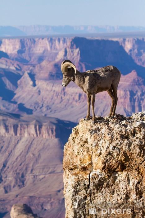 Naklejka Pixerstick Big Horn Ram stojąc na krawędzi Wielkiego Kanionu - Ssaki