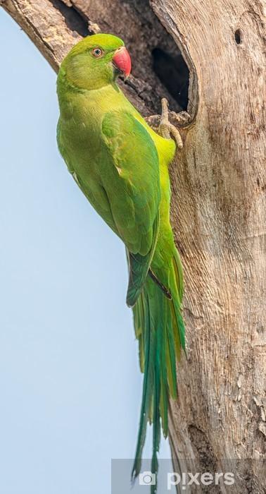 Papier peint vinyle Perruche à collier, perché sur une branche d'arbre, nature, copie spa - Oiseaux