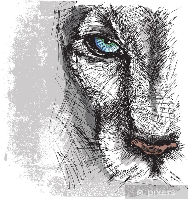 Papier peint vinyle Croquis à main tiré d'un lion regardant fixement la caméra - Thèmes