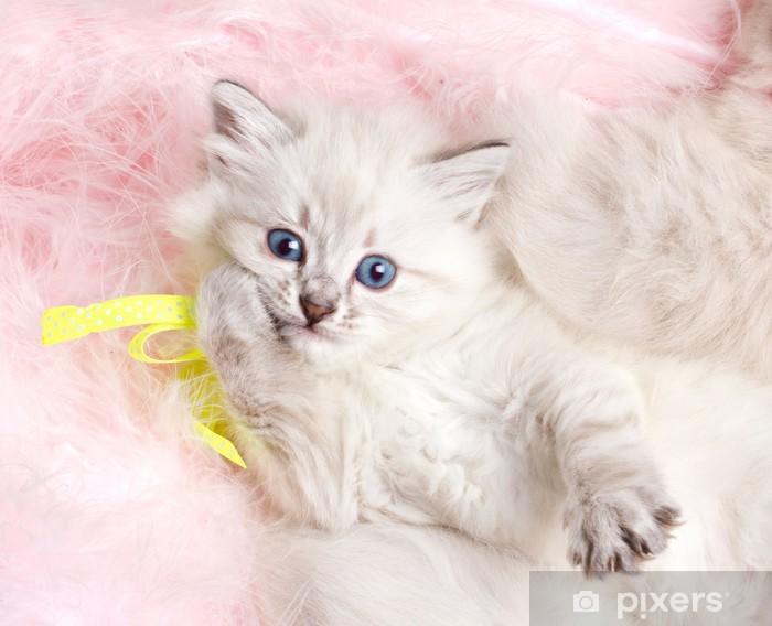 Carta Da Parati Pelosa Rosa : Carta da parati gattino peloso sdraiata sul tappeto di pelliccia