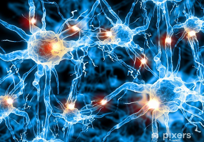 Papier peint vinyle Illustration d'une cellule nerveuse - Santé et médecine
