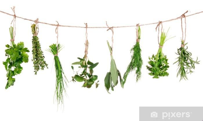 Fototapeta winylowa Świeże zioła wiszące na białym tle - Zioła