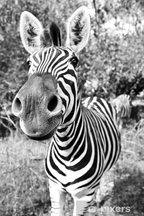 Fototapeta samoprzylepna Zebra Pysk - Tematy
