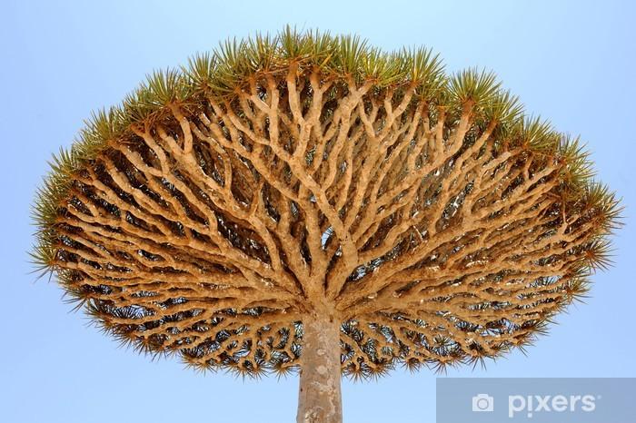 Nálepka Pixerstick Jemen. Ostrově Sokotra. Dračí strom - Střední Východ