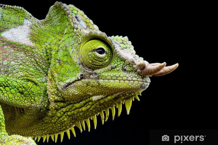 Vinilo Pixerstick Cuatro cuernos camaleón quadricornis / Trioceros - Temas
