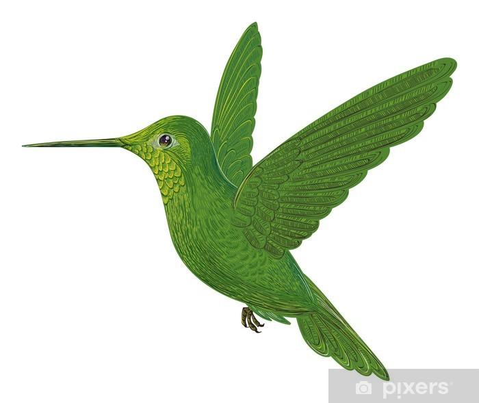 Plakat Koliber - Ptaki