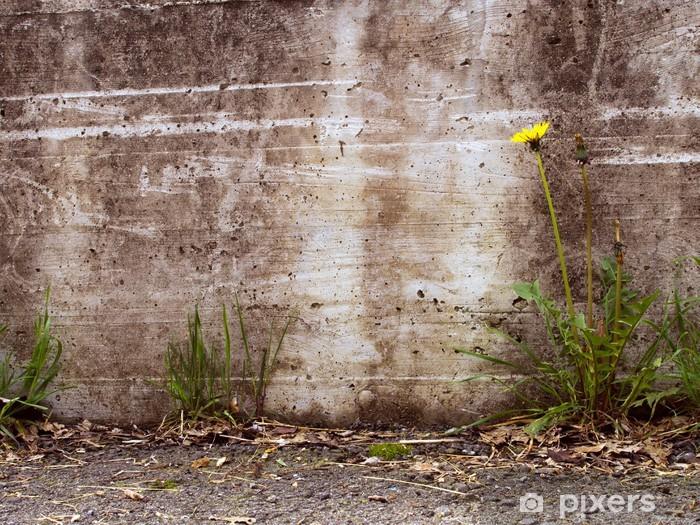 Fototapeta winylowa Urban decay szczegół - mniszek przez betonową ścianę, Taraxacum oficjalnie - Zabytki