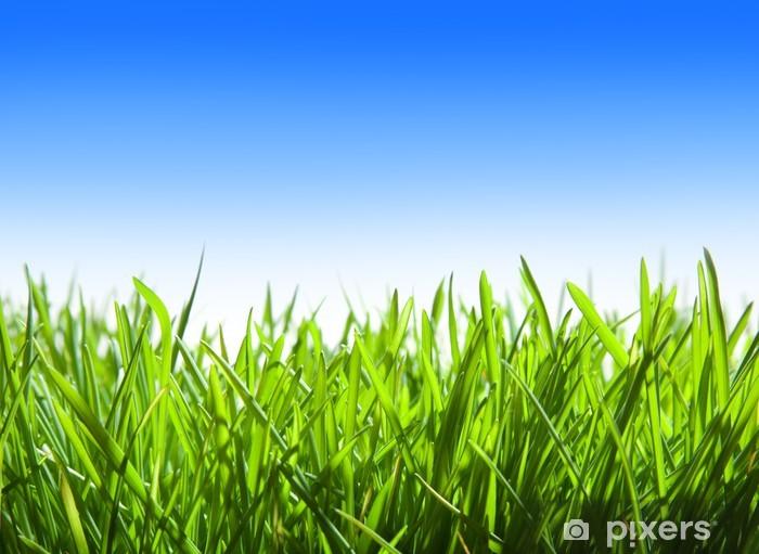 Vinylová fototapeta Zelená tráva a modré nebe - Vinylová fototapeta