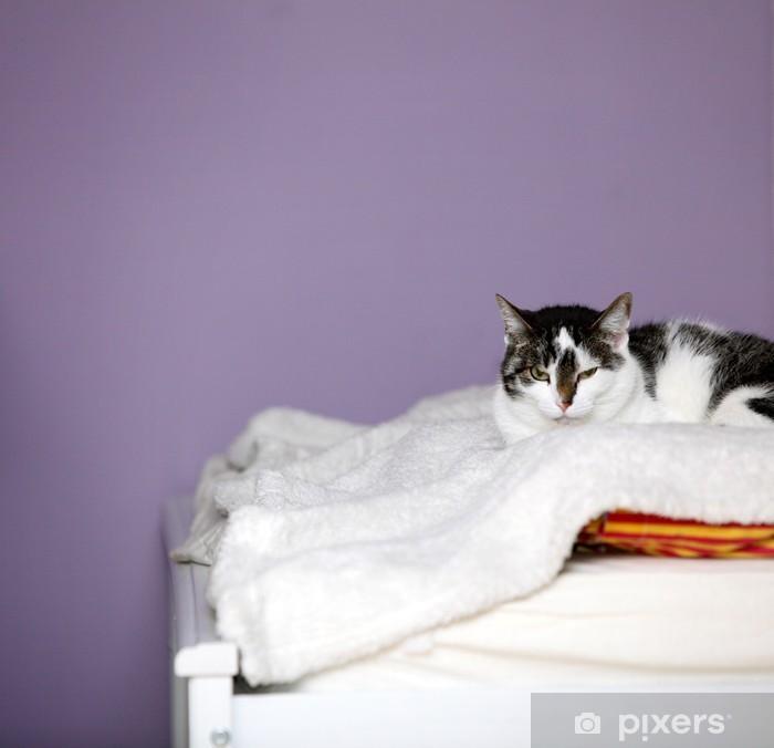 Fototapeta Duży Dom Kot Leży Na łóżku Pixers żyjemy By Zmieniać