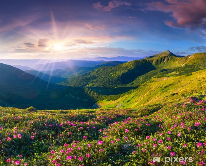 Magic pink rhododendron flowers in the mountains. Summer sunrise Pixerstick Sticker - Themes