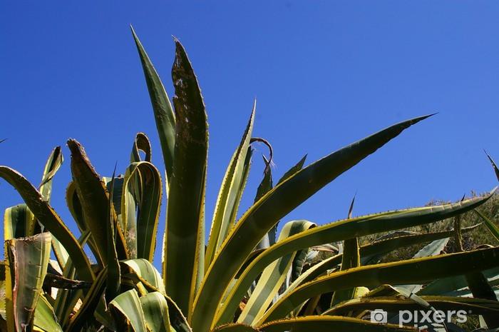 Vinyl-Fototapete Riesenkakteen - Pflanzen