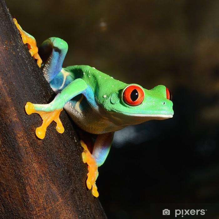 Sticker Pixerstick Yeux rouges grenouille grenouille aux yeux rouges dans le terrarium - Autres Autres