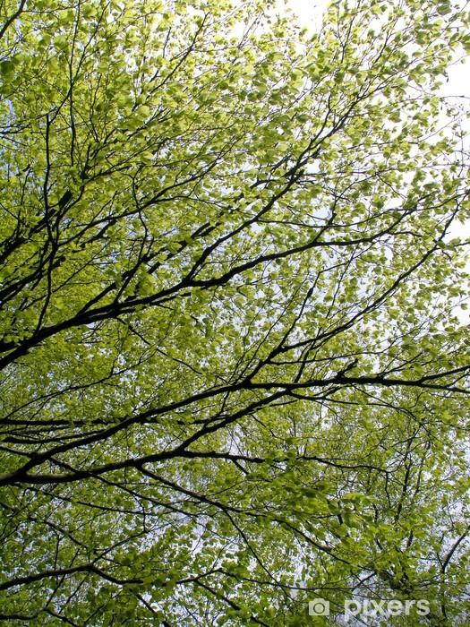 Fototapeta winylowa Gałęzie bukowe - Europa