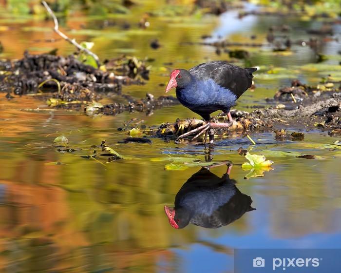 Fototapeta winylowa Waterfowl - Ptaki