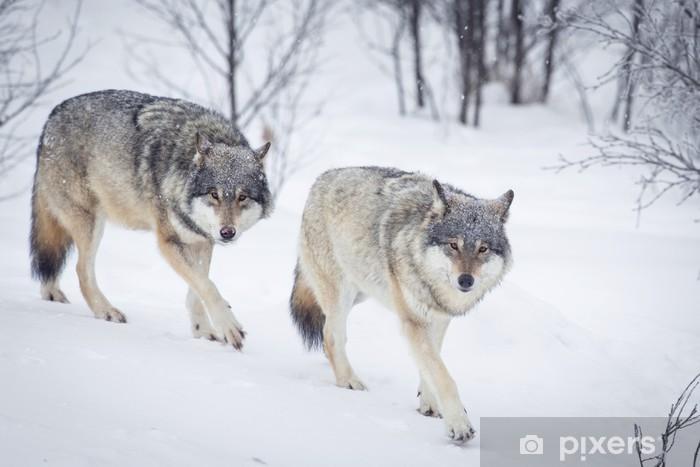 Papier peint vinyle Trois loups dans la neige - Thèmes