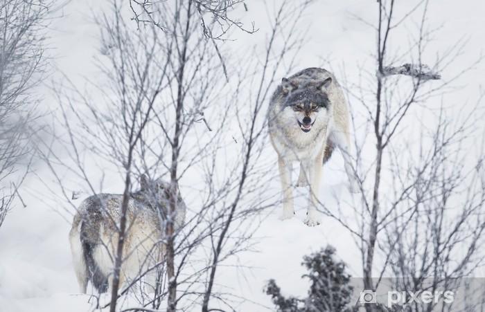 Nálepka Pixerstick Tři vlci ve sněhu - Savci