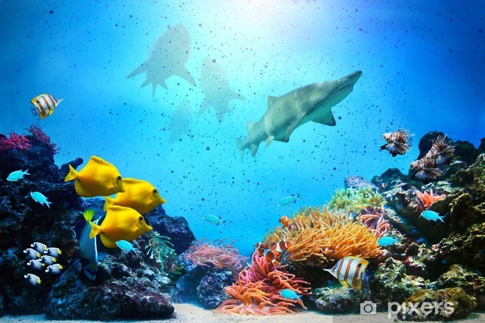Underwater scene. Coral reef, fish groups, sharks Self-Adhesive Wall Mural - Sharks