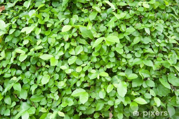 Carta Da Parati Verde Siepe Texture Da Giardino Pixers Viviamo