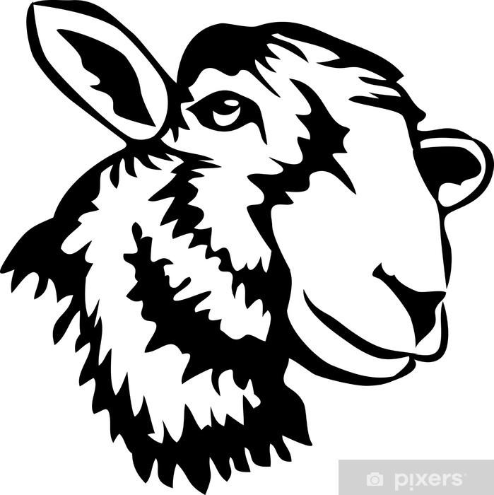 Poster en cadre Tête de mouton - Mammifères