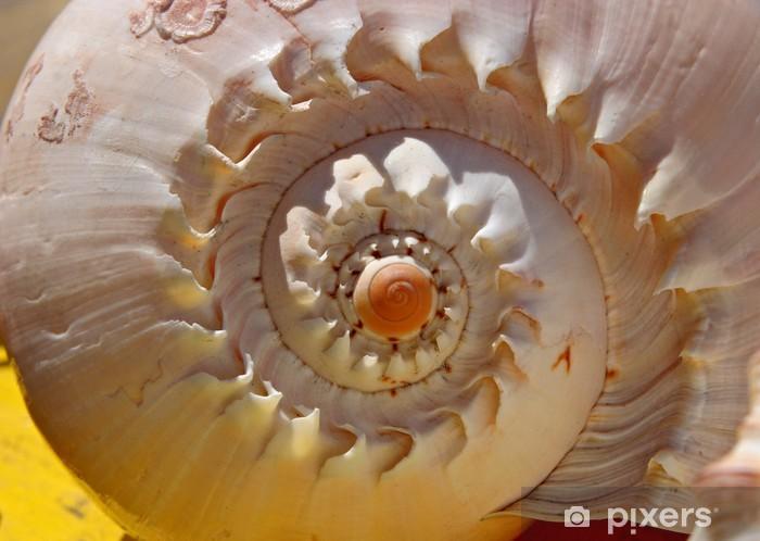 Afwasbaar Fotobehang Shell spiraal -