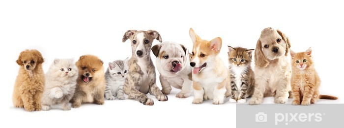 Group Of Puppies фтв Kitten Of Different Breeds Cat And Dog Wall