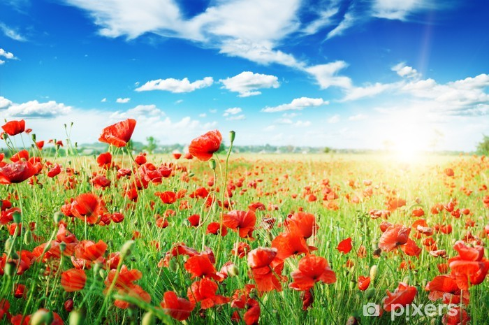 poppies field in rays sun Pixerstick Sticker - Meadows, fields and grasses