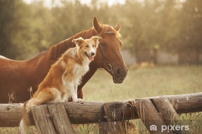 Naklejka Pixerstick Red Border Collie Pies i koń - Ssaki