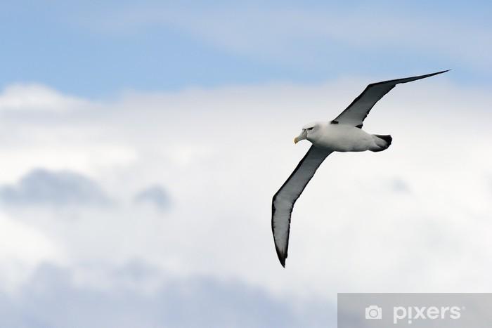 Naklejka Pixerstick Black-browed Albatross latające z nieba. - Ptaki