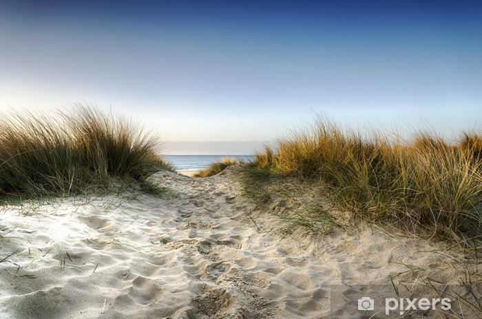 Path through the Dunes Vinyl Wall Mural - iStaging