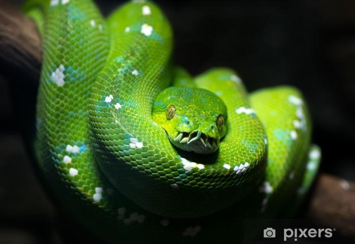vihreä käärme suomessa