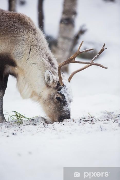 Carta da Parati in Vinile Renna mangiare l'erba in un bosco d'inverno - Temi