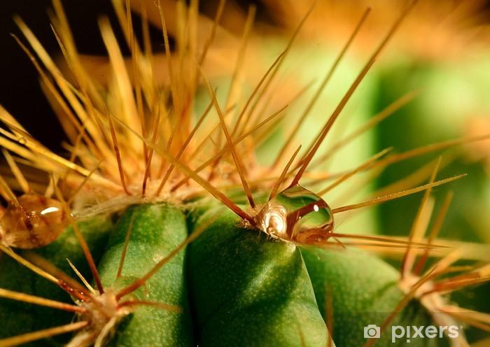 Water drop on cactus Pixerstick Sticker - Plants