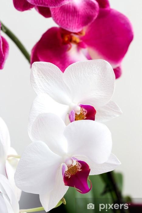 Papier peint vinyle Fleurs blanches et roses orchidées - Thèmes