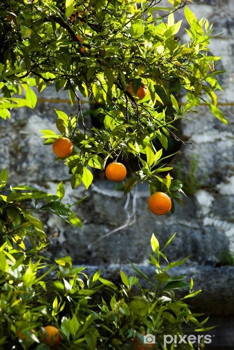 Naklejka Pixerstick Mandarynka drzewo przed kamiennym murem - Posiłki