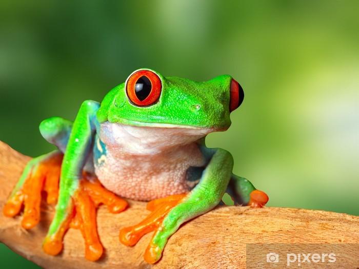 Naklejka Pixerstick Czerwony eyed drzewa żaba - Żaby