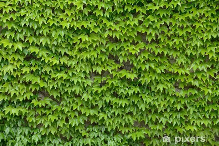 Vinilo Pixerstick Hiedra pared de fondo - Texturas